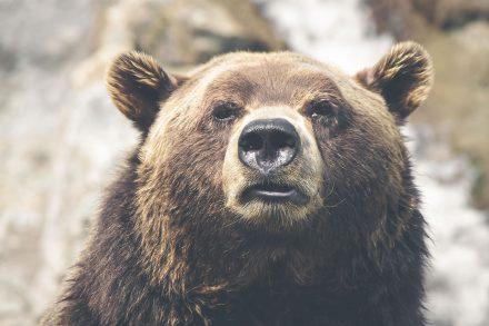 Weird bear<em>Time after time</em>