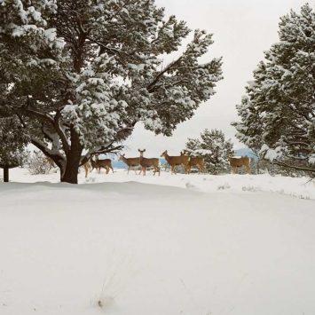 Early snow <em>Inbetween days</em>
