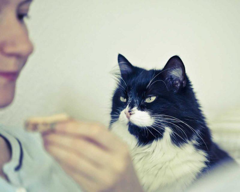 Cat hungry sounds<em>Chirps, Trills, and Chirrups</em>